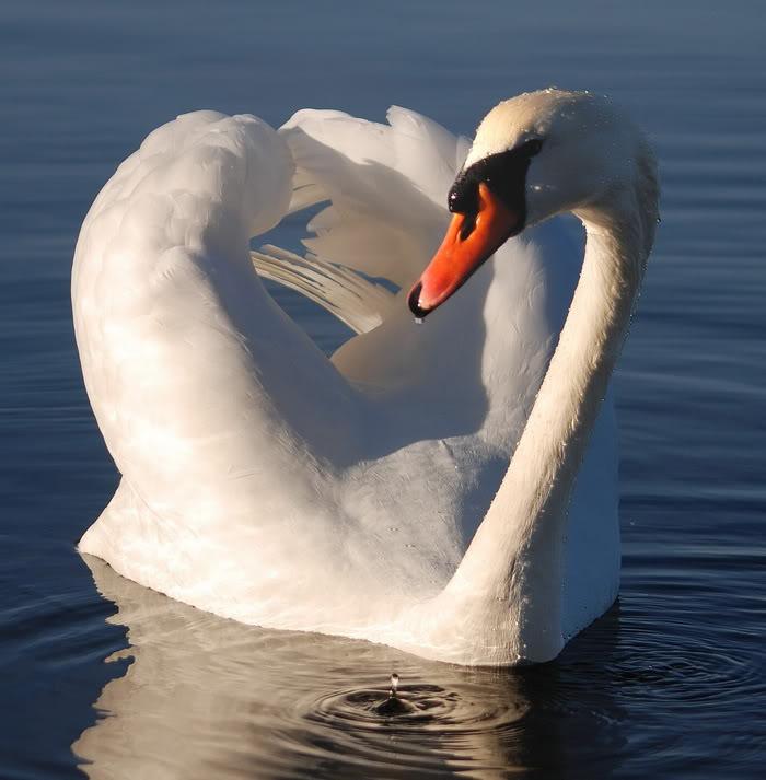 تصاوير عاشقانه و رمانتيك از پرندگان