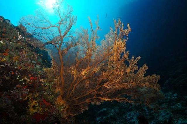 دنیای شگفت انگیز زیر آب