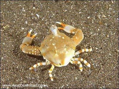 خرچنگهای جالب و متفاوت