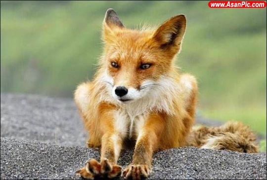 تصاویری بسیار زیبا از دنیای حیوانات - قسمت سیزدهم