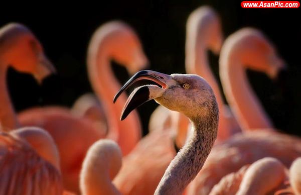 تصاويری از دنیای زیبای پرندگان - قسمت پنحم