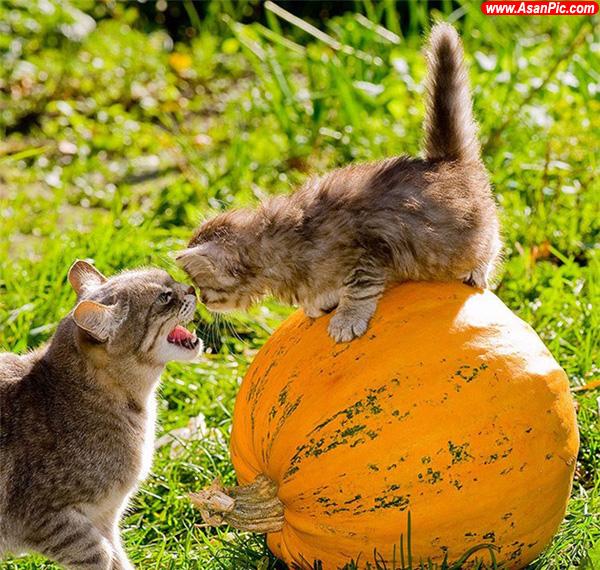عکسهایی از احساس و عشق حيوانات