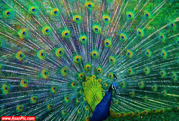 تصاویری از حيوانات زيبا و رنگارنگ