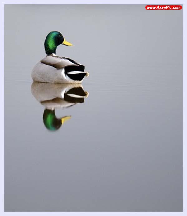تصاويری از دنیای زیبای پرندگان - قسمت نهم