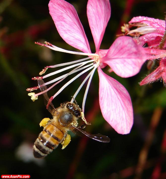 تصاویری از حشره های مرموز در دل طبیعت