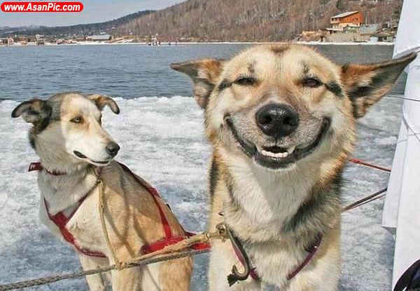 عکس های بامزه از خنده حیوانات - قسمت دوم
