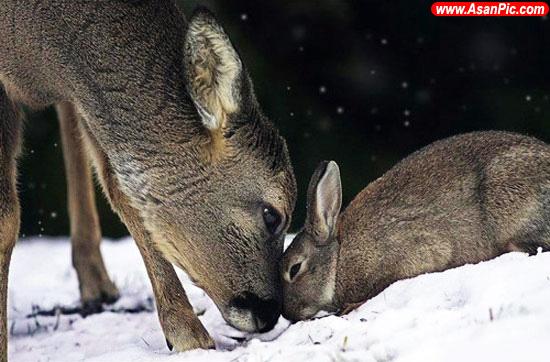 دوستی و عشق حیوانات به یکدیگر