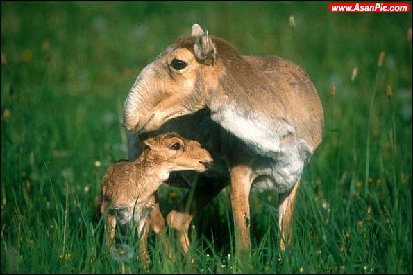 حیواناتی که تنها مادرشان ظاهر آنها را دوست دارد