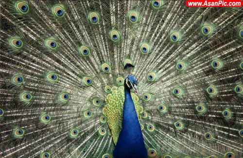 تصاویری از حیوانات زشت و زیبا