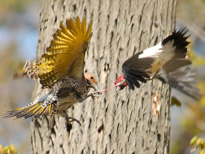 تصاويری زیبا و دیدنی از دنیای پرندگان - قسمت اول