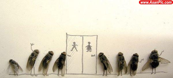 تصاويری از هنرنمایی با مگس مرده