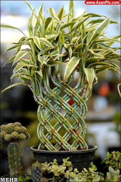 گزارش تصویری نمایشگاه بین المللی گل و گیاه