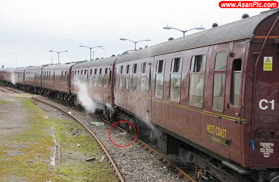 لانه سازی مرغ دریایی کنار ریل قطار!
