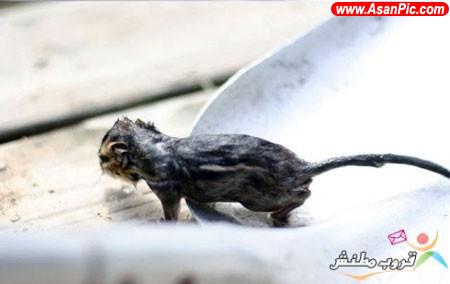 تصاویری از نجات موش توسط قورباغه