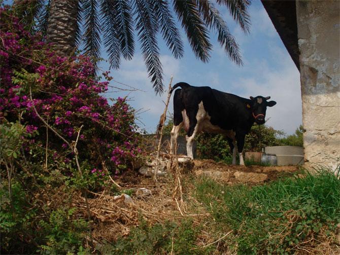 تصاویری از دیدنی ها و زیبایی های لبنان