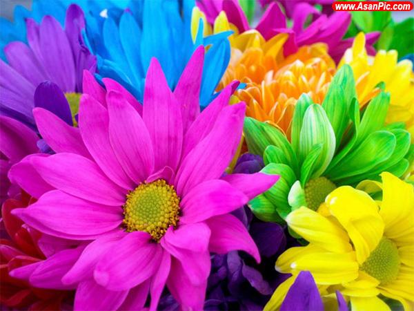 تصاویری ازجهان رنگارنگ اطراف ما