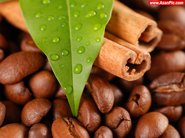عکس شگفت انگیز از قهوه تلخ