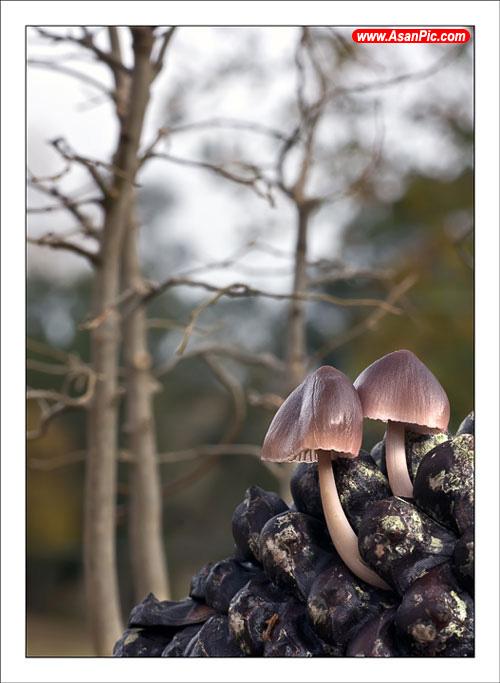 عکس های زیبا و شگفت انگیز قارچ ها از آلکس آلونسو