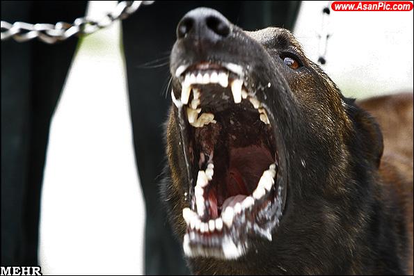گزارش تصویری مرکز آموزش سگ های موادیاب ناجا
