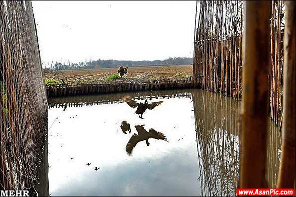 گزارش تصویری دوما ( دامگاه پرندگان وحشی)