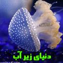 تصاویری بسیار دیدنی از دنیای زیر آب