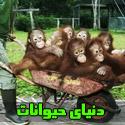 تصاويری بسيار جالب و خنده دار از دنيای حيوانات
