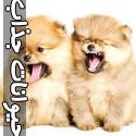 تصاویر خنده دار و جالب از دنیای حیوانات - قسمت سوم