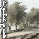 تسخیر درختان توسط عنکبوت