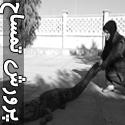 تصاویری از راه انداختن مزرعه پرورش تمساح توسط زن ایرانی