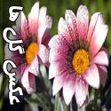 عکس های زیبا از گل ها - قسمت اول
