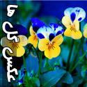 عکس های زیبا از گل ها - قسمت دوم