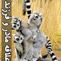 علاقه مادر و فرزند در حيوانات