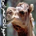 تصاويری از حیوانات صحرایی