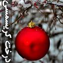 تصاويری از تزئین درخت های کریسمس