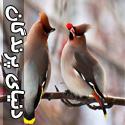 تصاويری از دنیای زیبای پرندگان - قسمت دوم