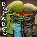 تصاويری از دنیای زیبای پرندگان - قسمت سوم