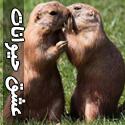 تصاویر عاشقانه و جدید از حیوانات