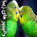 والپیپرهای بسیار زیبا از پرندگان