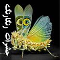 تصاویری از حشرات عجيب و رنگارنگ