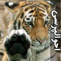 سلام و احوال پرسی حيوانات
