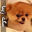 سگ نازی كه در فيس بوک مشهور شد!