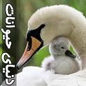 تصاويری از دنیای زیبای پرندگان - قسمت هفتم