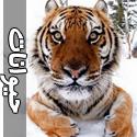 خشم و محبت حيوانات