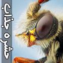 حشرات مرموز و جذاب خلقت خدا