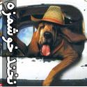 عکس های بامزه از خنده حیوانات - قسمت اول