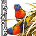 نقاشی های حیرت انگیز از پرندگان - قسمت اول