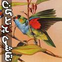 نقاشی های حیرت انگیز از پرندگان - قسمت دوم