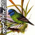 نقاشی های حیرت انگیز از پرندگان - قسمت سوم
