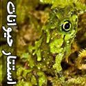 عکس های شگفت انگیز و زیبا از استتار حیوانات - قسمت اول