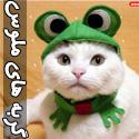 عکس های گربه های ناز و ملوس - قسمت اول